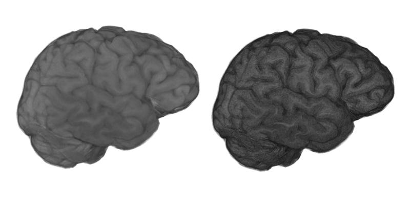 Human Brain Png Brain Basic Edge Png