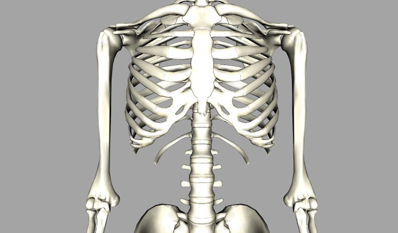 Famous Hip Skeleton Images - Anatomy And Physiology Biology Images ...
